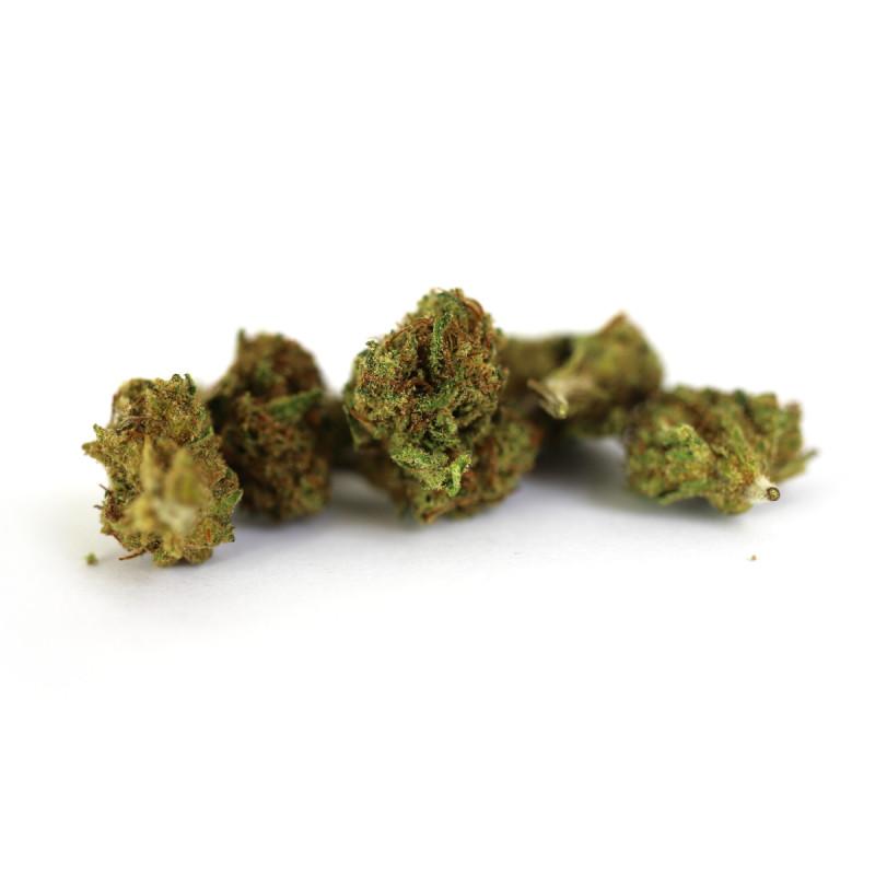 Mango Sapphire Small Bud