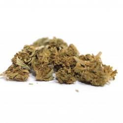 Therapy Small bud